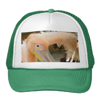 Watching You Pelican Hat