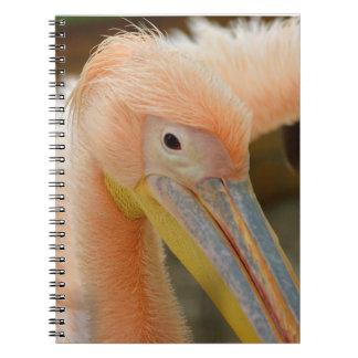 Watching You Pelican Notebook
