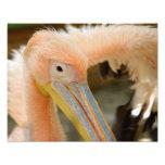 Watching You Pelican Photo Print