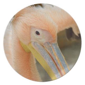 Watching You Pelican Plate