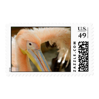 Watching You Pelican Stamp