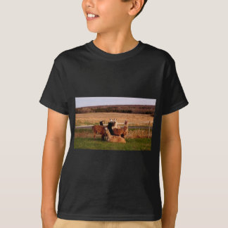 Watching you watching me= Llamas on guard T-Shirt