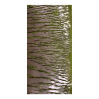 Water and paddy field card