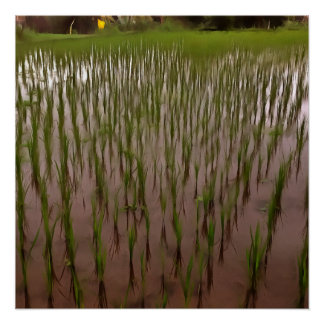 Water and paddy field poster