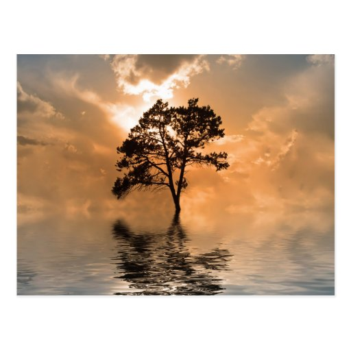 Water and tree sunset postcard