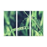 Water bead on green spa grass gallery wrap canvas