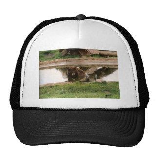 Water Bear Mesh Hat