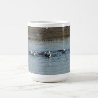 Water Birds Swimming at Morro Bay Classic White Coffee Mug