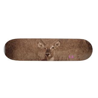 Water Buck Skate Board Deck