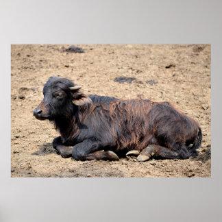 Water buffalo calf print