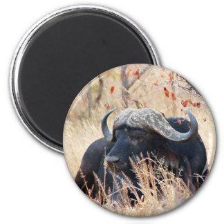 water buffalo fridge magnet