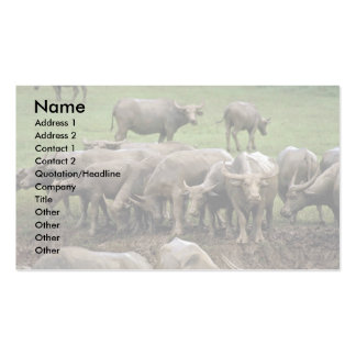 Water Buffalo On Bank Business Card Template