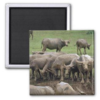 Water Buffalo On Bank Fridge Magnet