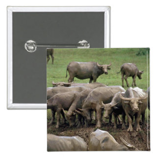 Water Buffalo On Bank Pinback Buttons