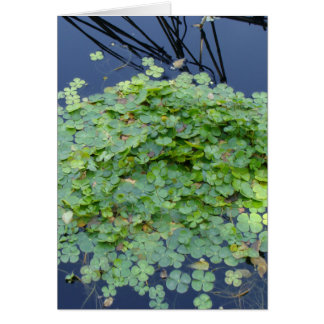Water clover, Marsilea mutica Card