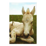 Water Colour Foal Custom Stationery