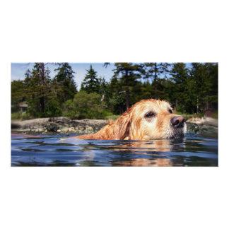 Water Dog - Photo Card