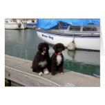 Water Dogs on the Dock Greeting Cards