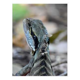 WATER DRAGON QUEENSLAND AUSTRALIA POSTCARD