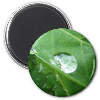Water Drip on Leaf Water Conservation Design 2 Inch Round Magnet