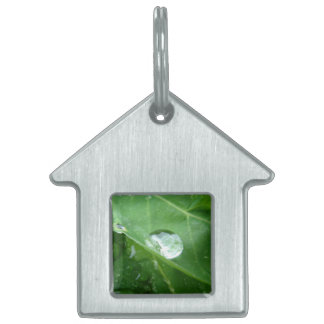 Water Drip on Leaf Water Conservation Design Pet Name Tag
