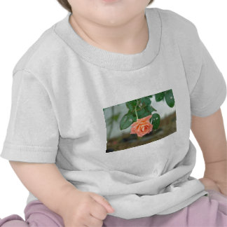 Water dripping from a peach rose t shirts