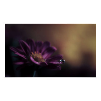 Water drop on flower poster