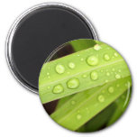 water drop on leaves magnets