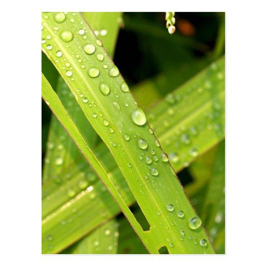 water drop on leaves postcard