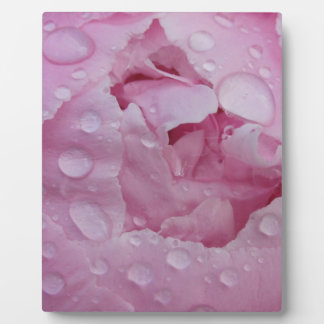 Water drop on peony plaque