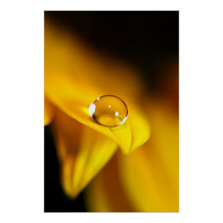 Water Drop on Sunflower Petal Poster