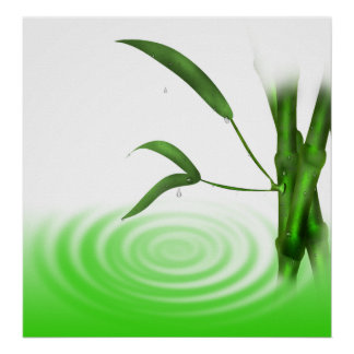 Water drop water ripple bamboo plant  Print
