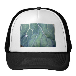 Water Droplet on a Cabbage Leaf Trucker Hat