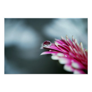 Water Droplet on Pink Flower. Poster
