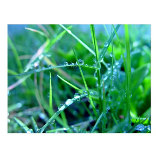 Water droplets on grass postcard