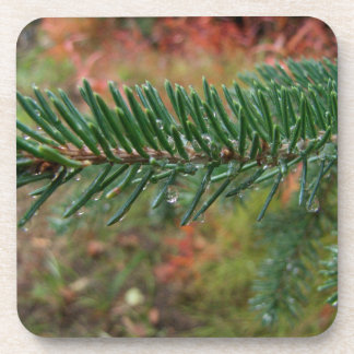 Water Droplets on Spruce Bough Beverage Coaster
