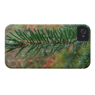 Water Droplets on Spruce Bough iPhone 4 Case