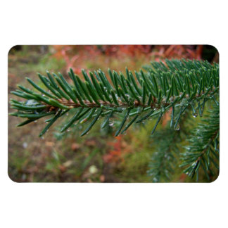 Water Droplets on Spruce Bough Magnet