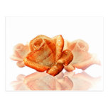 Water Dropped Rose with Sheet Music - Postcard