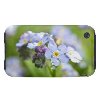Water Drops - Forget Me Nots iPhone 3 Tough Covers
