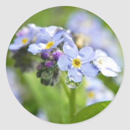Water Drops - Forget Me Nots Classic Round Sticker