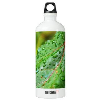 Water Drops on a Green Leaf Aluminum Water Bottle