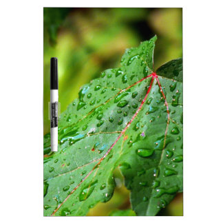 Water Drops on a Green Leaf Dry-Erase Boards