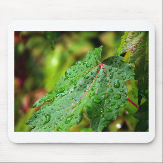 Water Drops on a Green Leaf Mousepad