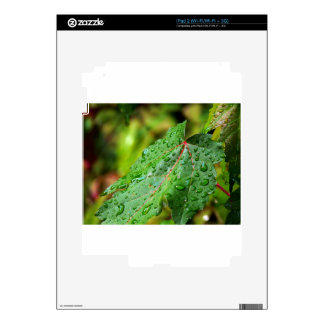 Water Drops on a Green Leaf iPad 2 Decal