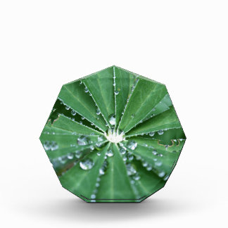 Water drops on a leaf. award