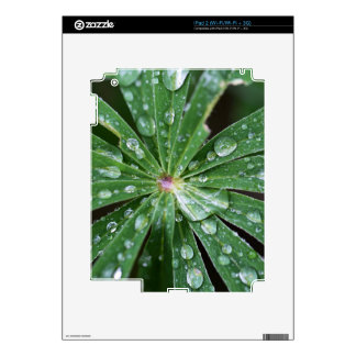 Water drops on a leaf. iPad 2 decals