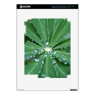 Water drops on a leaf. iPad 3 decal