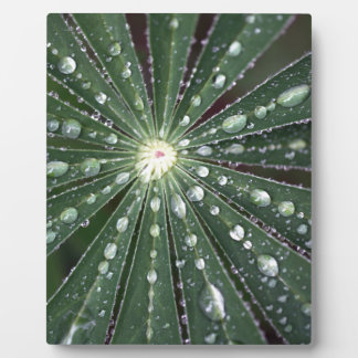 Water drops on a leaf. . plaque