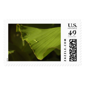 Water Drops on Banana Leaf, Photo 7 Postage Stamp